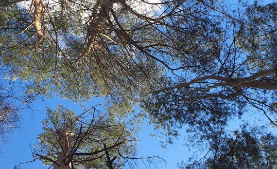 Pavasaris Natur Camp Birštone